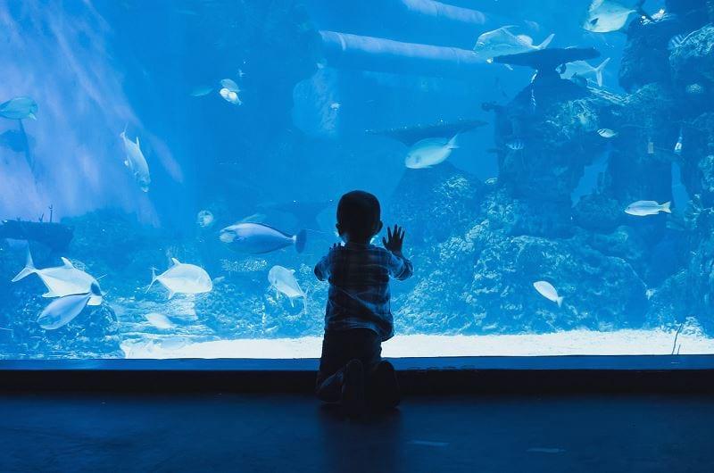 lättskötta akvariefiskar