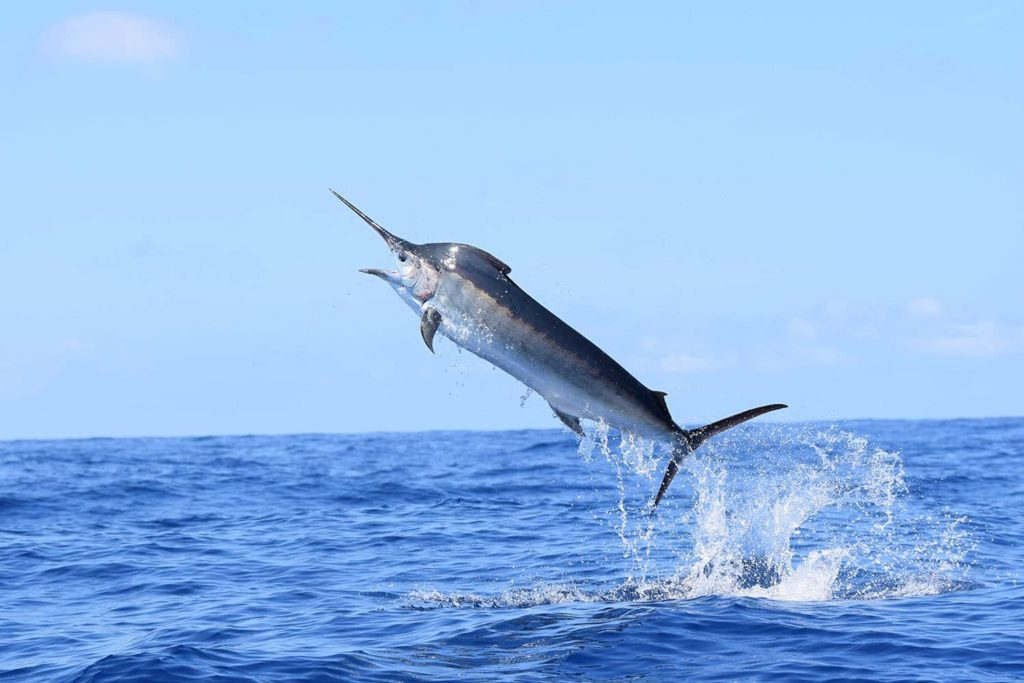 snabbaste djuret i vatten