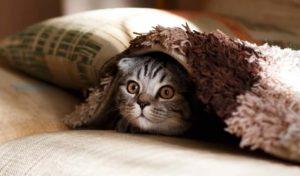 bästa katten för allergiker