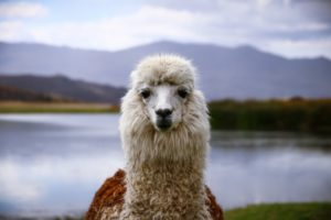 djur i sydamerika