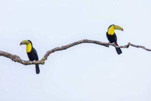 hur parar sig fåglar