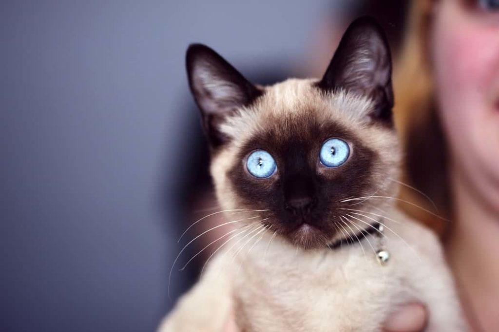 katt som passar allergiker