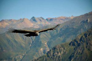 världens största fågel
