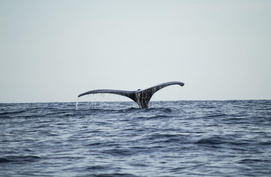 världens största valar