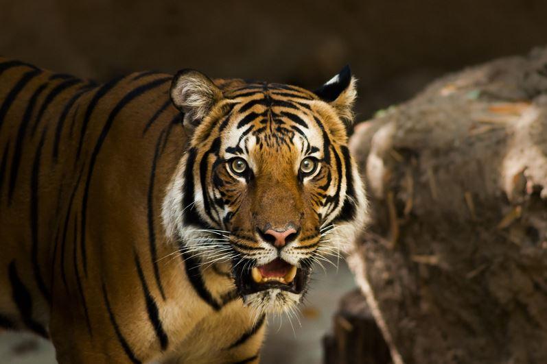 världens starkaste djur