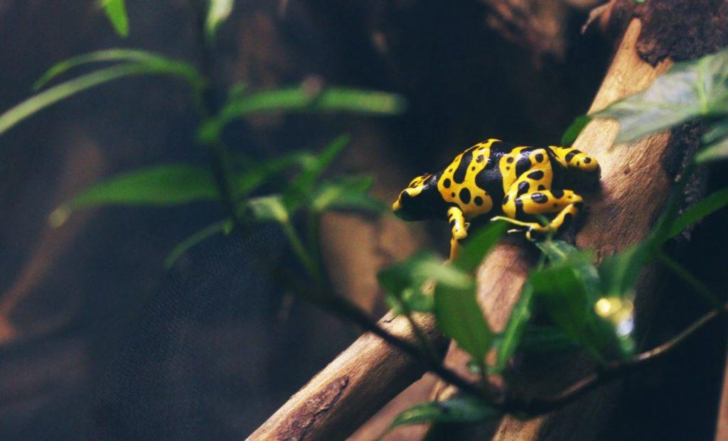 Världens giftigaste djur
