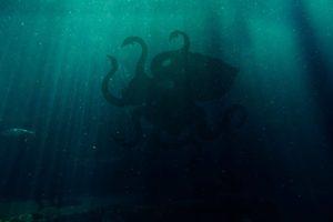 världens största bläckfisk