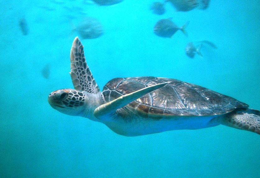 världens största sköldpaddor